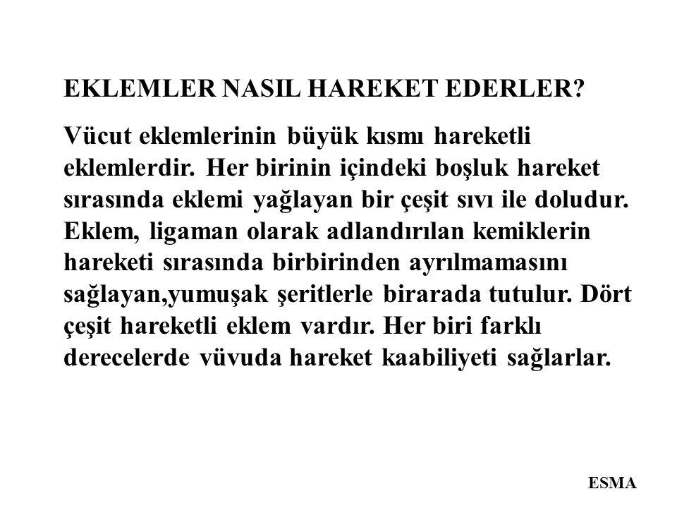 EKLEMLER NASIL HAREKET EDERLER