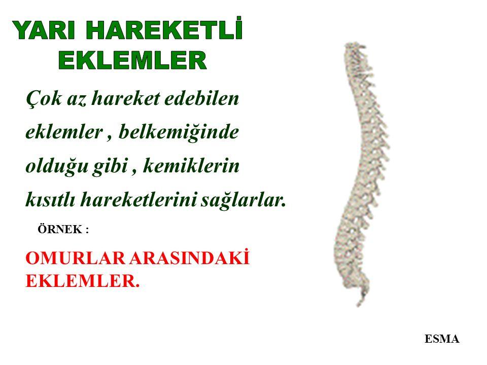 YARI HAREKETLİ EKLEMLER