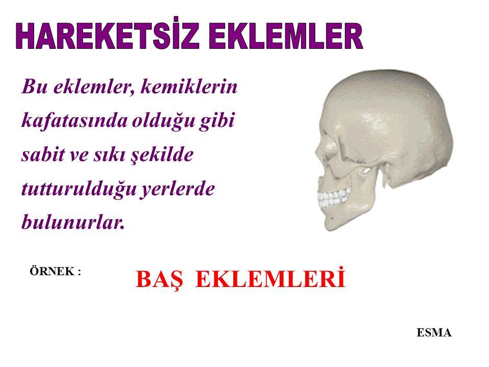 HAREKETSİZ EKLEMLER BAŞ EKLEMLERİ