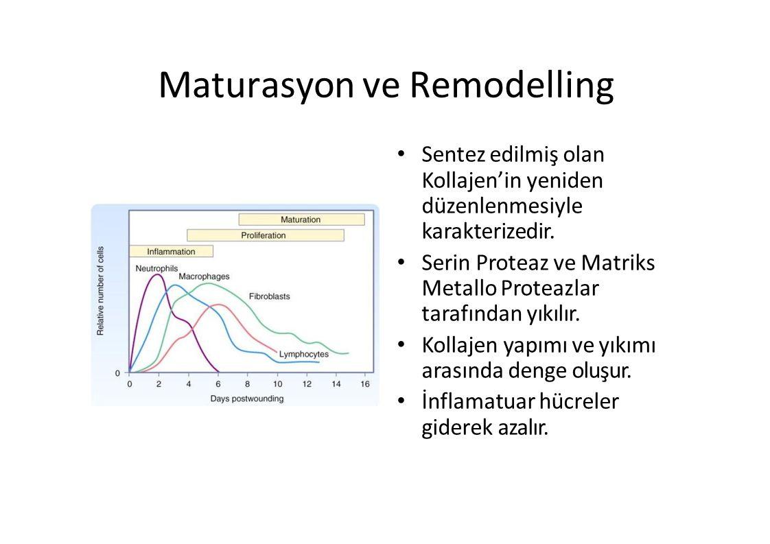 Maturasyon ve Remodelling