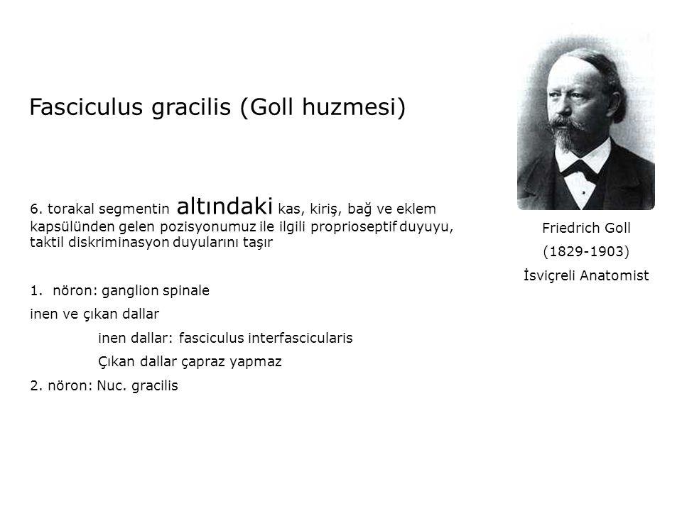 Fasciculus gracilis (Goll huzmesi)