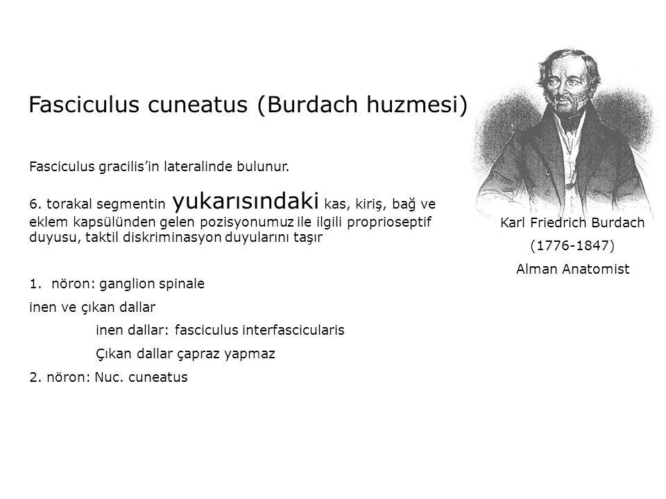 Karl Friedrich Burdach