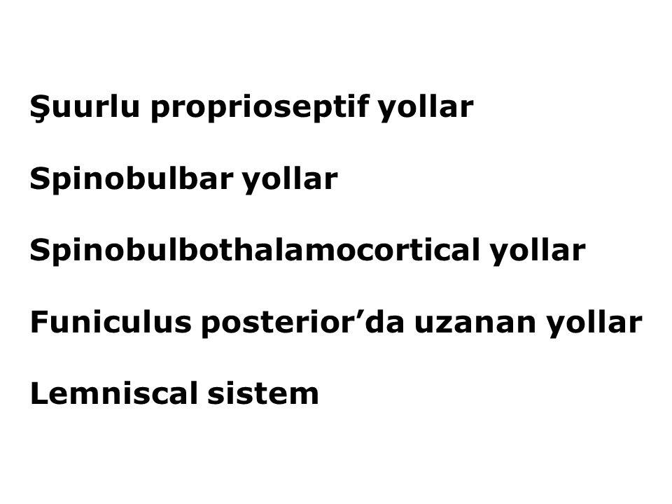 Şuurlu proprioseptif yollar