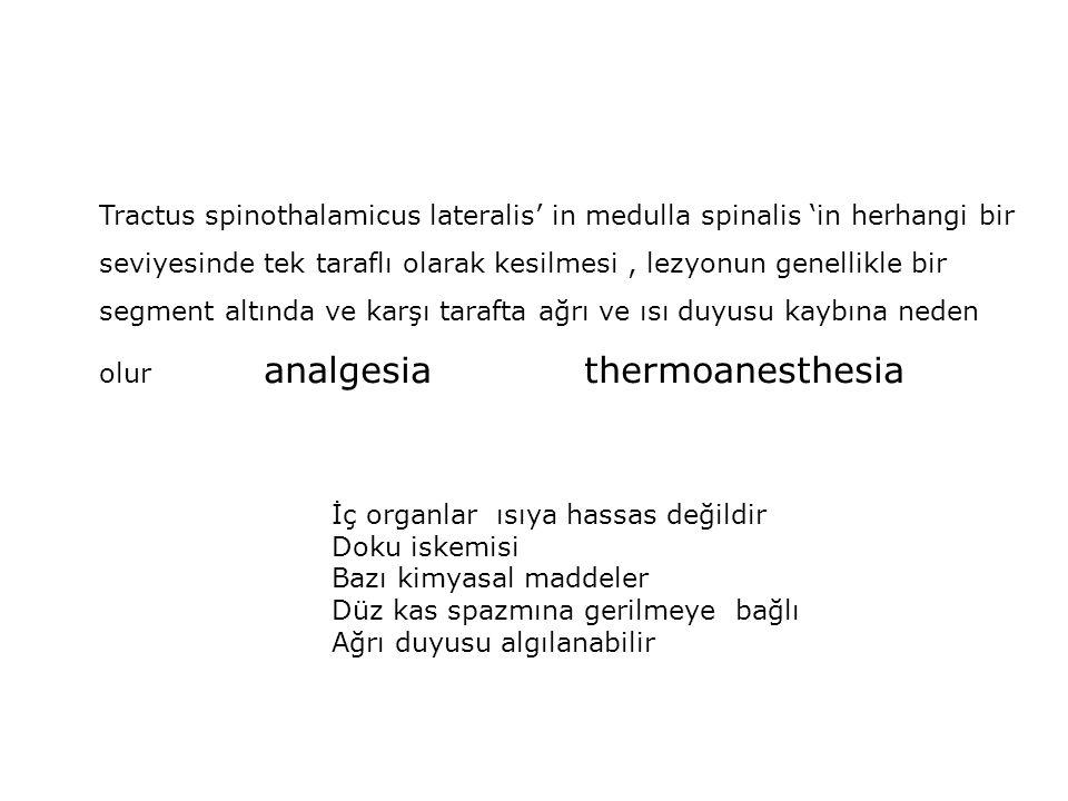 Tractus spinothalamicus lateralis' in medulla spinalis 'in herhangi bir