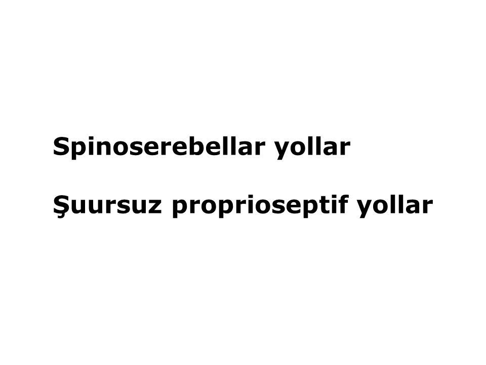 Spinoserebellar yollar