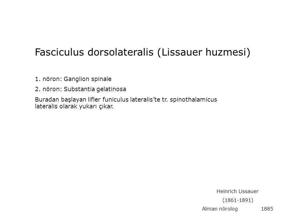 Fasciculus dorsolateralis (Lissauer huzmesi)