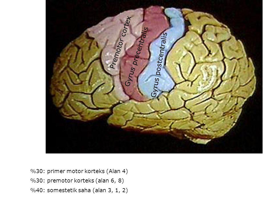 Premotor cortex Gyrus precentralis Gyrus postcentralis