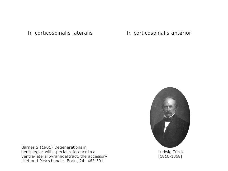 Tr. corticospinalis lateralis Tr. corticospinalis anterior