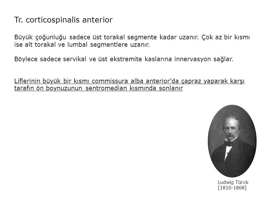 Tr. corticospinalis anterior