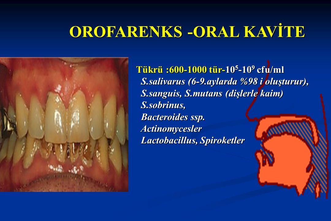 OROFARENKS -ORAL KAVİTE