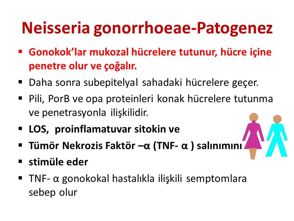 Neisseria gonorrhoeae-Patogenez