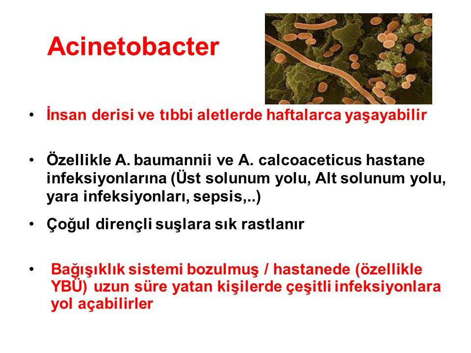Acinetobacter • İnsan derisi ve tıbbi aletlerde haftalarca yaşayabilir