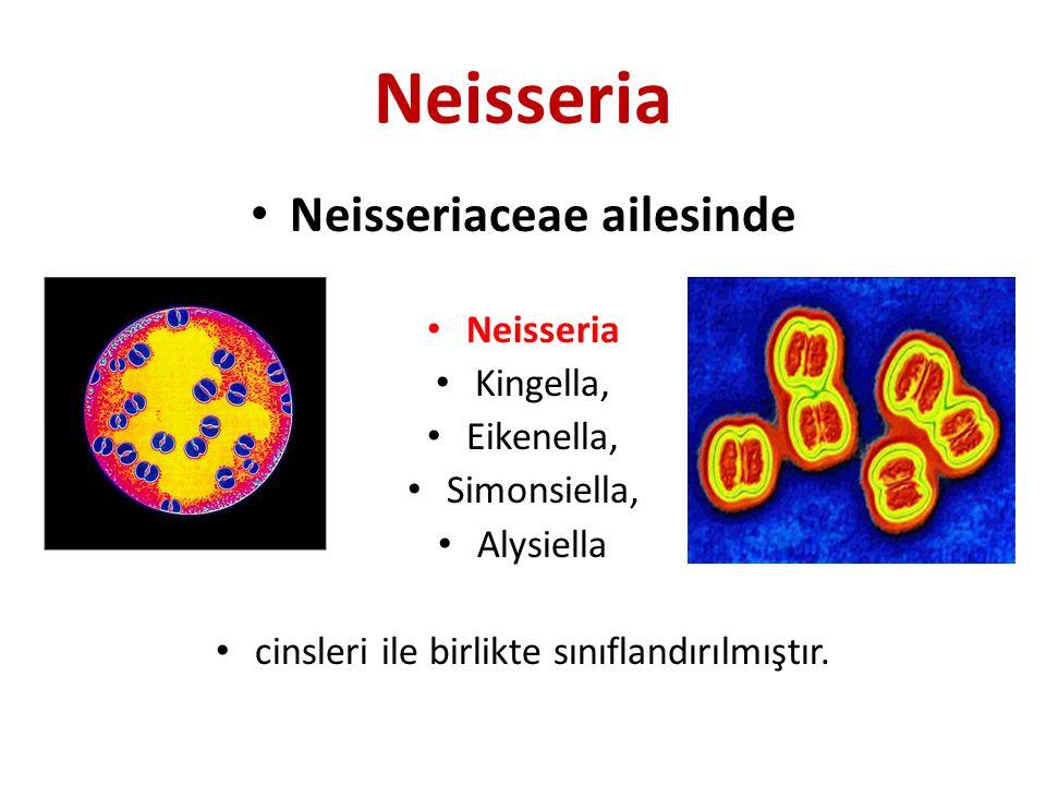 Neisseriaceae ailesinde