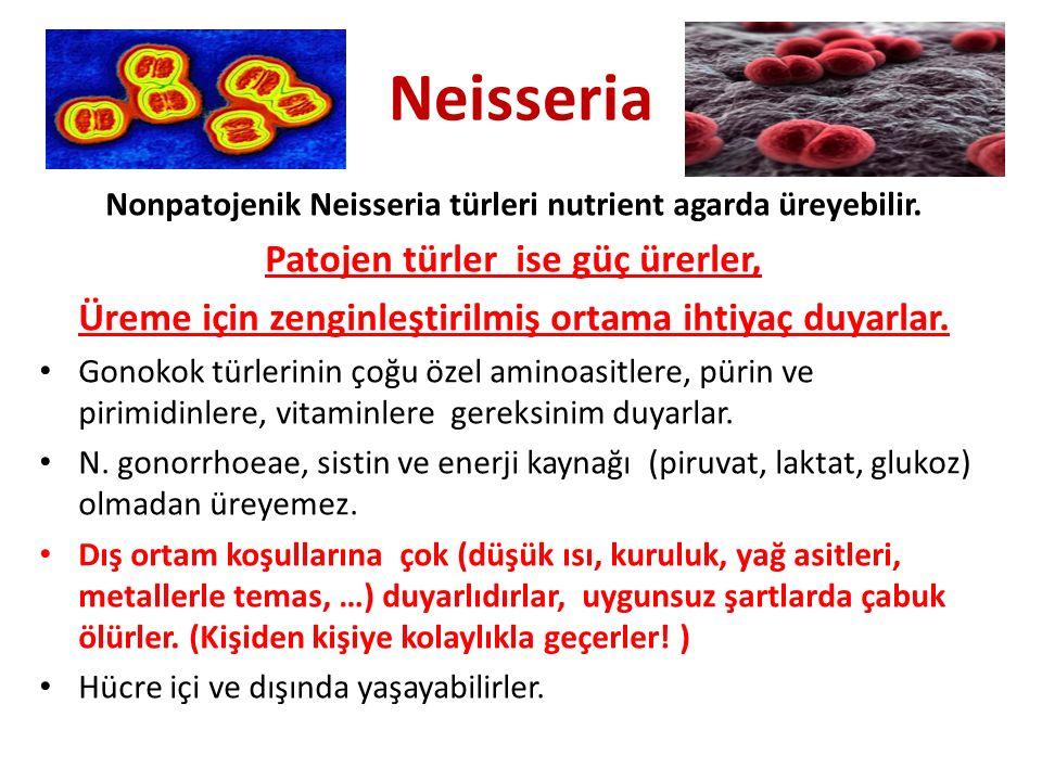 Neisseria Patojen türler ise güç ürerler,