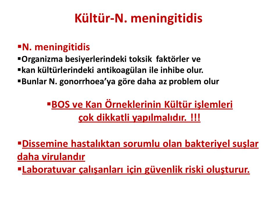 Kültür-N. meningitidis