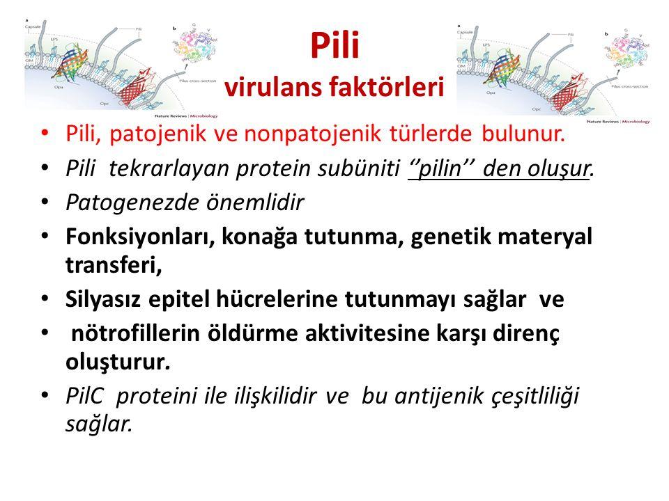Pili virulans faktörleri