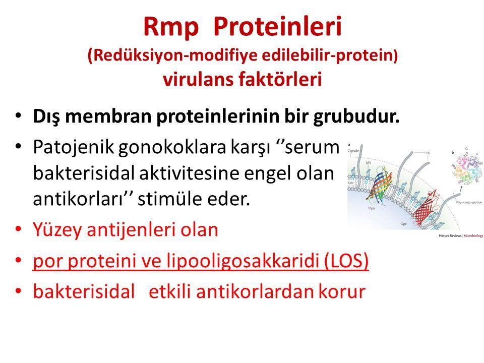 Rmp Proteinleri (Redüksiyon-modifiye edilebilir-protein) virulans faktörleri