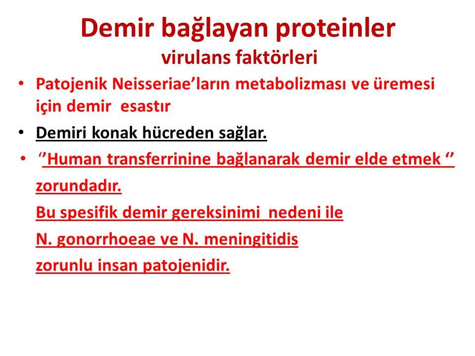 Demir bağlayan proteinler virulans faktörleri