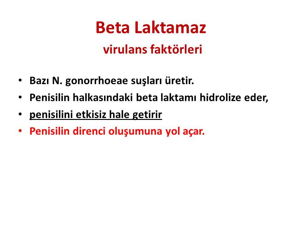 Beta Laktamaz virulans faktörleri
