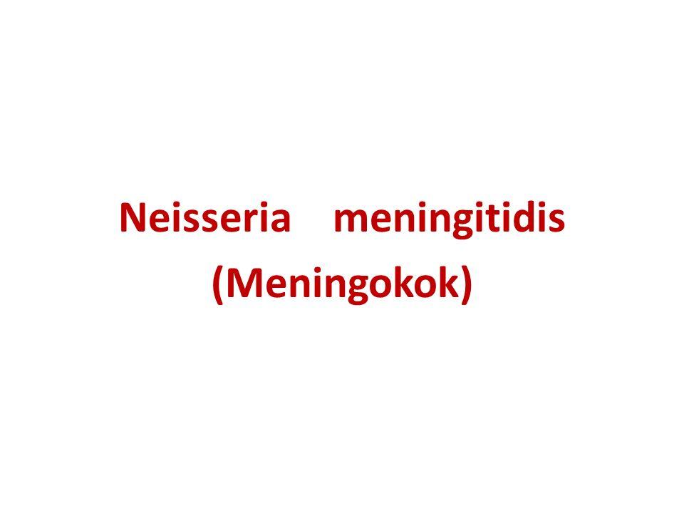 Neisseria meningitidis (Meningokok)