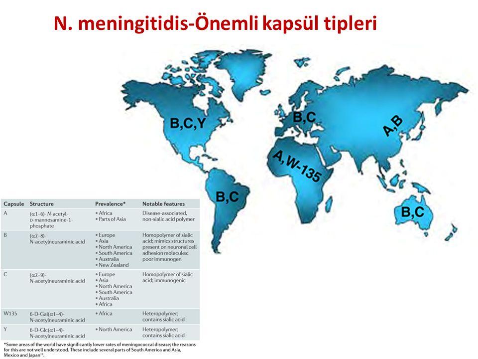 N. meningitidis-Önemli kapsül tipleri