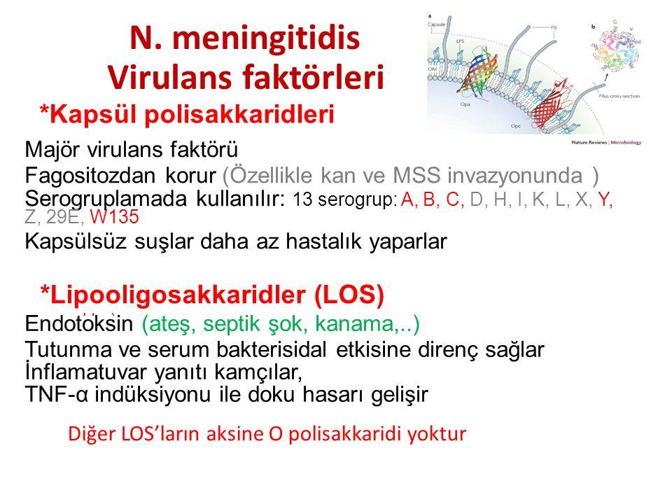N. meningitidis Virulans faktörleri