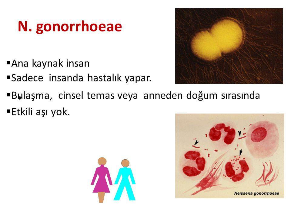 N. gonorrhoeae • infekte Ana kaynak insan