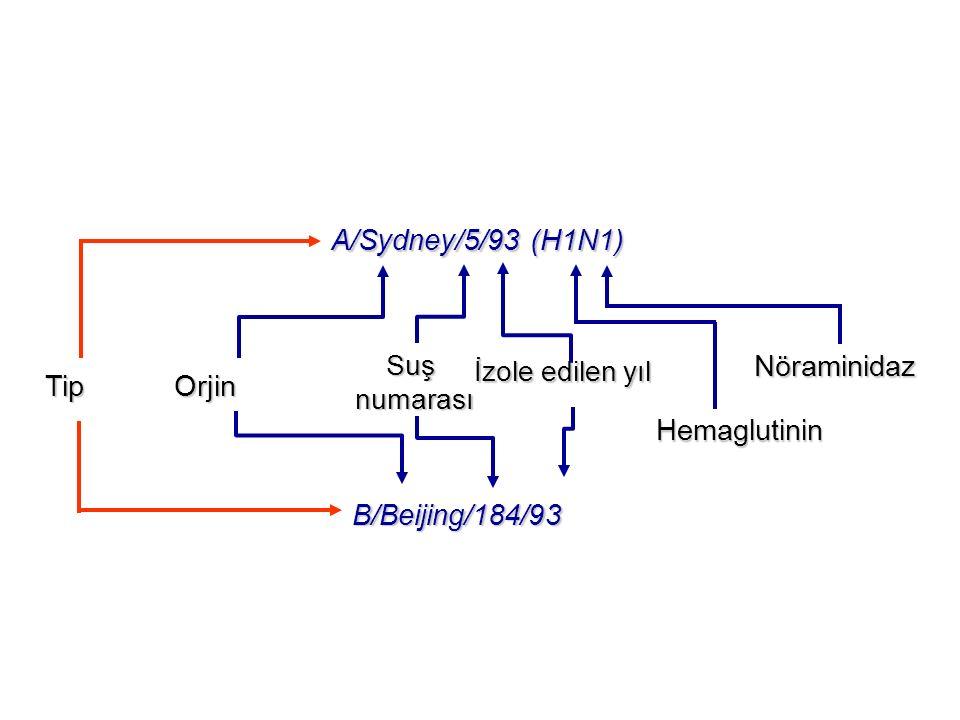 Slide 22 A/Sydney/5/93 (H1N1) Nöraminidaz Tip Orjin Hemaglutinin