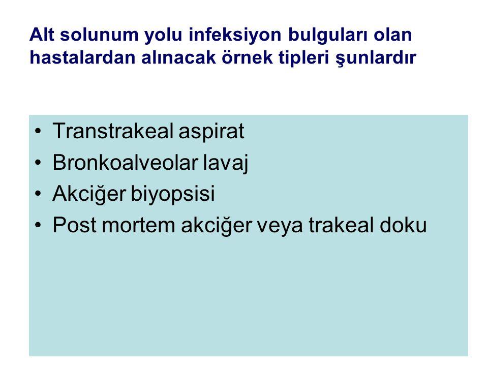 Post mortem akciğer veya trakeal doku