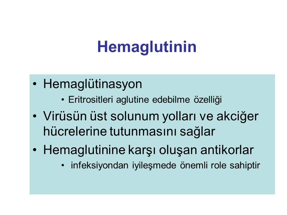 Hemaglutinin Hemaglütinasyon