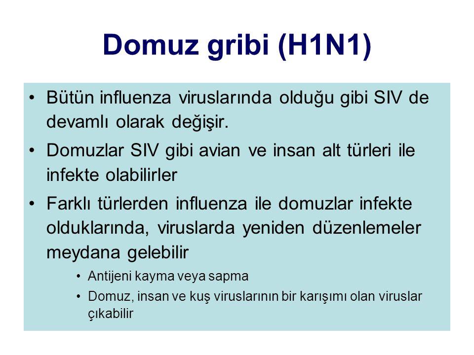 Domuz gribi (H1N1) Bütün influenza viruslarında olduğu gibi SIV de devamlı olarak değişir.