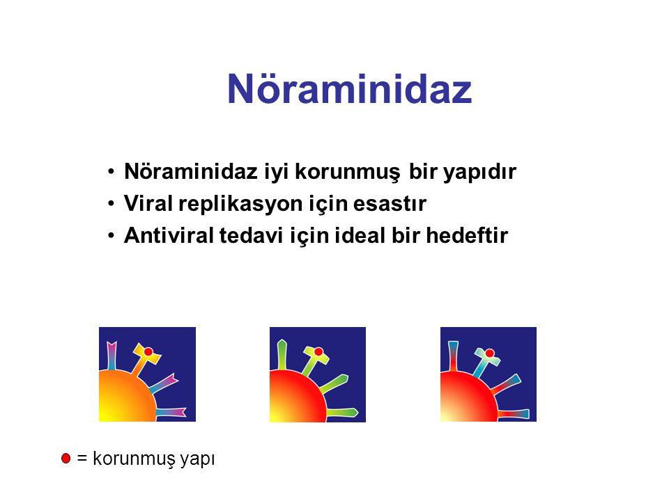 Nöraminidaz Slide 6 Nöraminidaz iyi korunmuş bir yapıdır