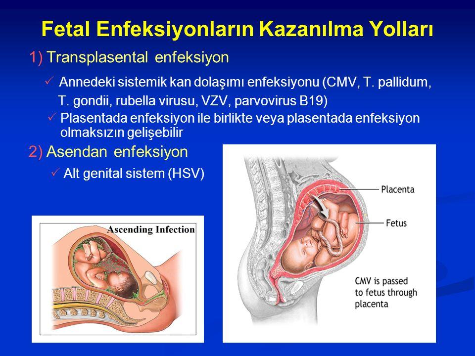 Fetal Enfeksiyonların Kazanılma Yolları