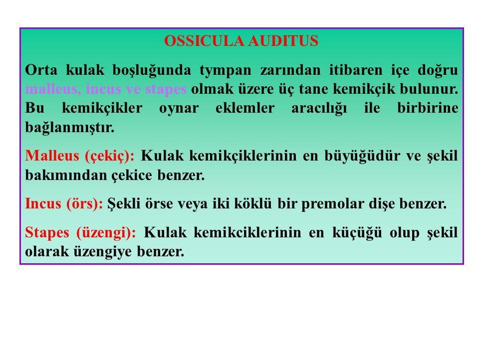 OSSICULA AUDITUS