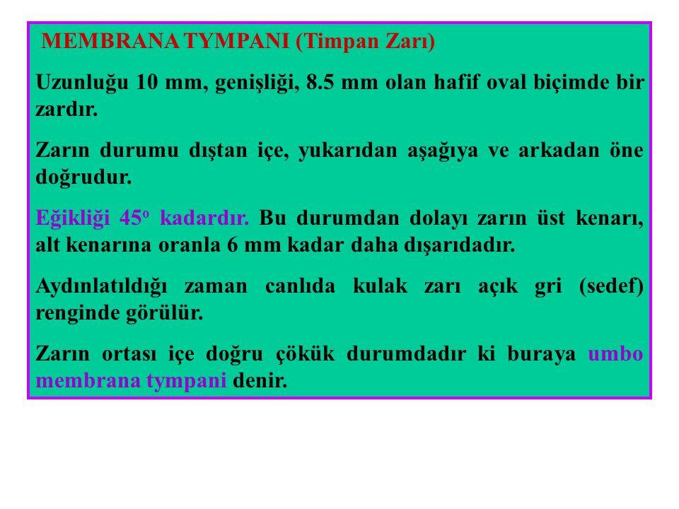 MEMBRANA TYMPANI (Timpan Zarı)
