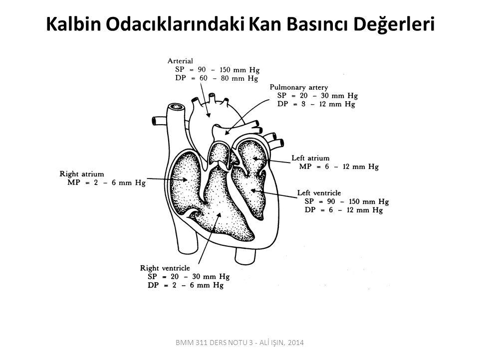 Kalbin Odacıklarındaki Kan Basıncı Değerleri