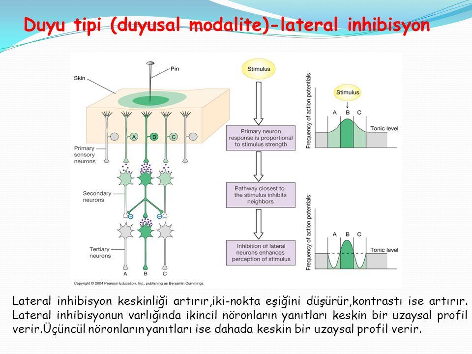 Duyu tipi (duyusal modalite)-lateral inhibisyon