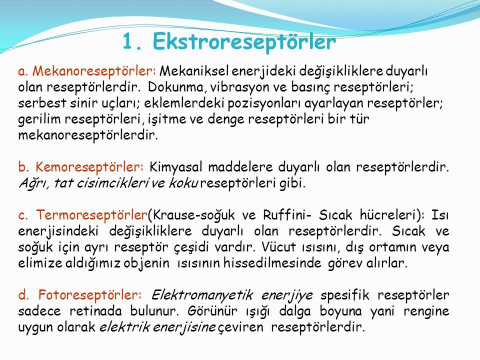 1. Ekstroreseptörler