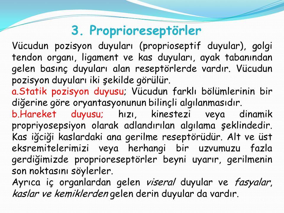 3. Proprioreseptörler