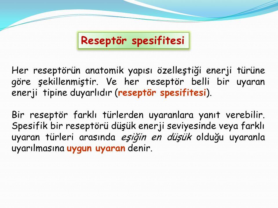 Reseptör spesifitesi