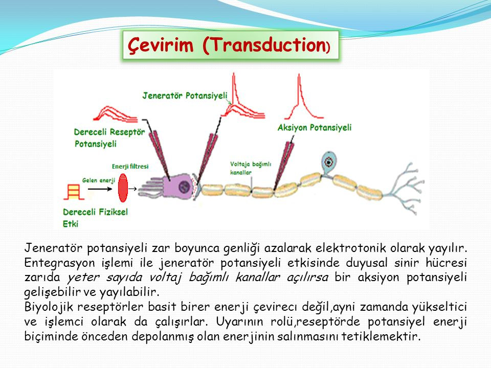 Çevirim (Transduction)