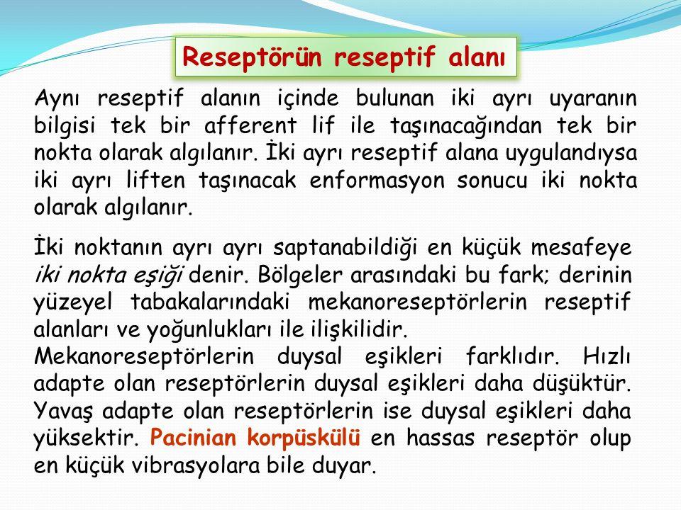 Reseptörün reseptif alanı