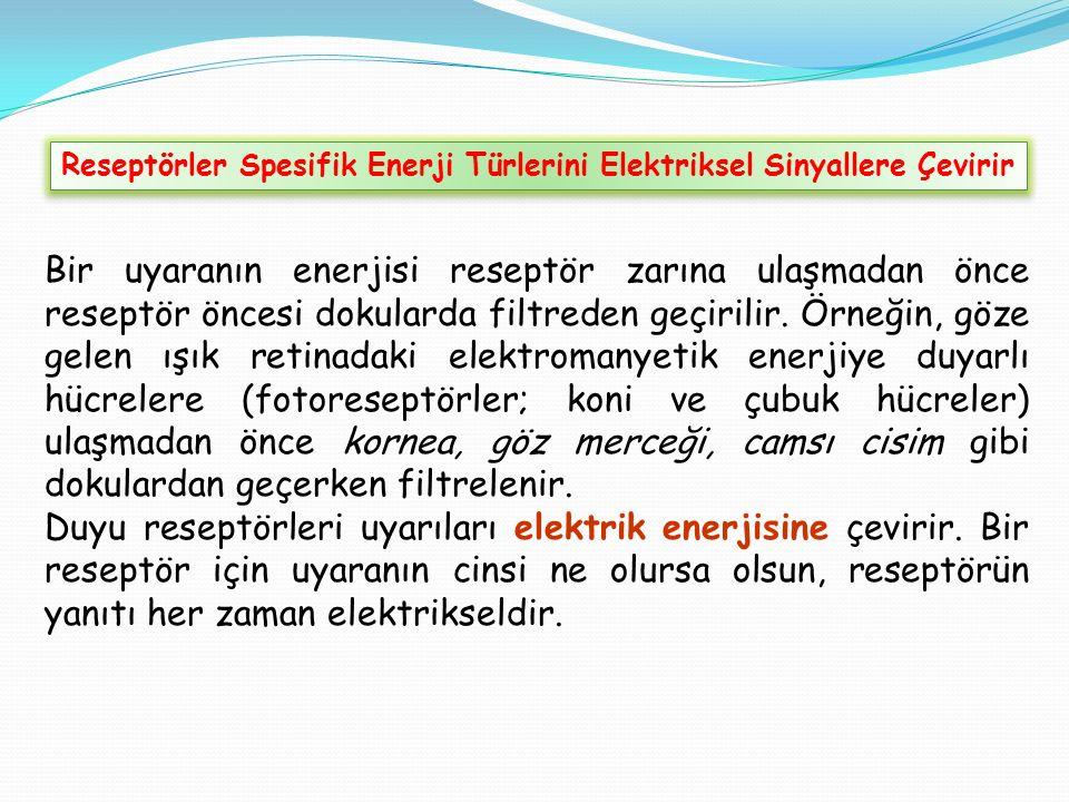 Reseptörler Spesifik Enerji Türlerini Elektriksel Sinyallere Çevirir