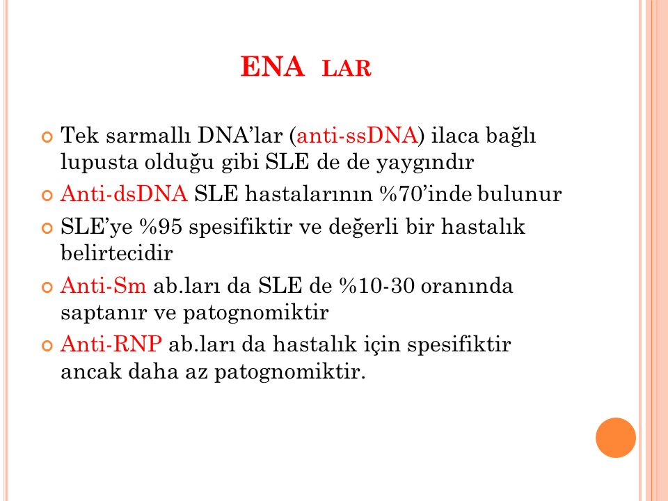 ENA lar Tek sarmallı DNA'lar (anti-ssDNA) ilaca bağlı lupusta olduğu gibi SLE de de yaygındır. Anti-dsDNA SLE hastalarının %70'inde bulunur.