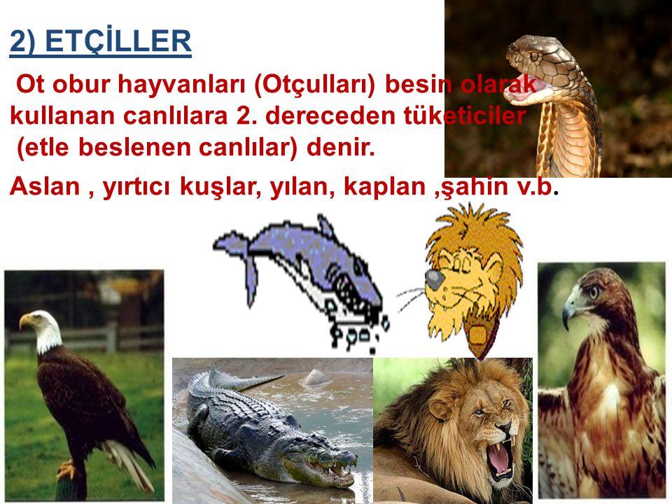 2) ETÇİLLER (etle beslenen canlılar) denir.