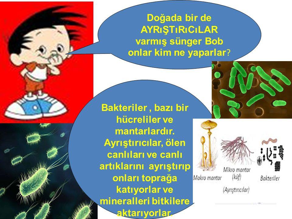 Doğada bir de ayrıştırıcılar varmış sünger Bob onlar kim ne yaparlar