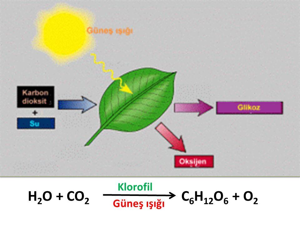 Klorofil H2O + CO2 C6H12O6 + O2 Güneş ışığı