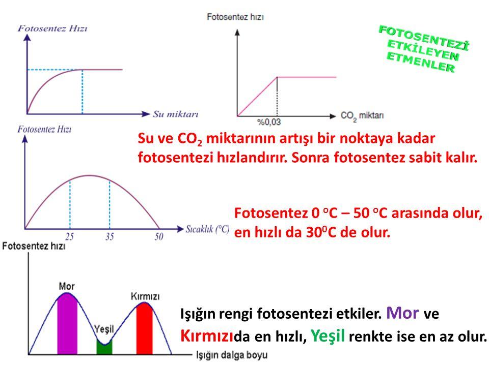 Su ve CO2 miktarının artışı bir noktaya kadar fotosentezi hızlandırır