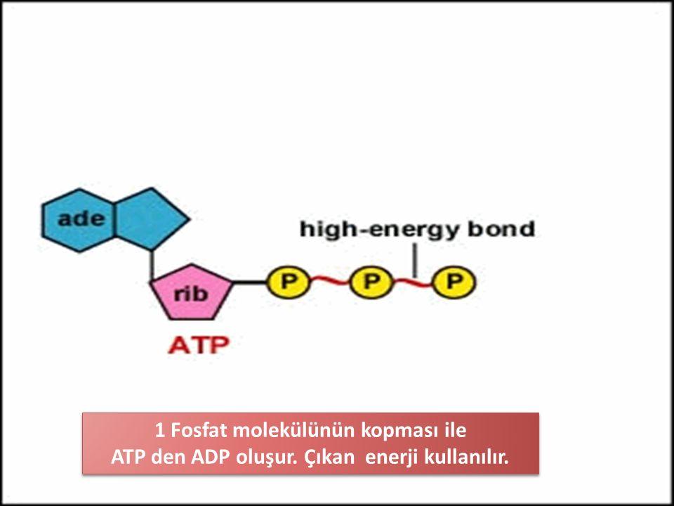 1 Fosfat molekülünün kopması ile