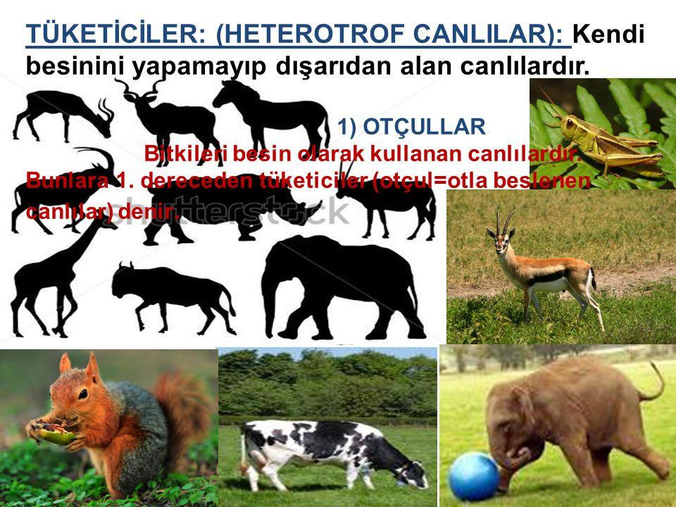 TÜKETİCİLER: (HETEROTROF CANLILAR): Kendi besinini yapamayıp dışarıdan alan canlılardır.